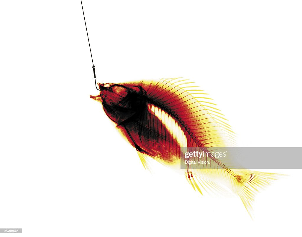 X-ray of fish on hook : Stock Photo