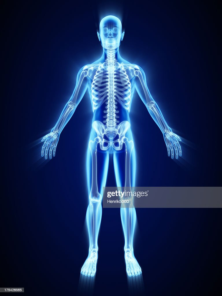 Xray Of Skelett Stock-Foto | Getty Images