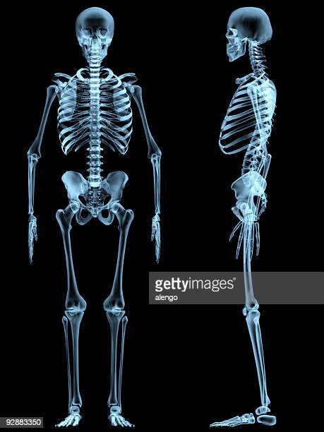 x-ray skeleton - human skeleton stock photos and pictures