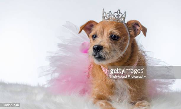 yaaaas queen! - highlywood fotografías e imágenes de stock