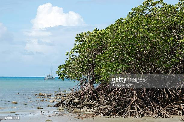 yacht and mangrove tree - mangrove tree stock pictures, royalty-free photos & images