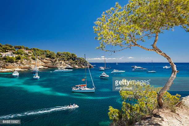 yachts in cala portals vells - majorca stock pictures, royalty-free photos & images