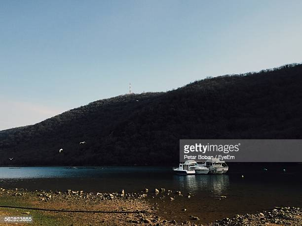 yachts moored in lim bay with seagulls flying against mountain - boban stock pictures, royalty-free photos & images