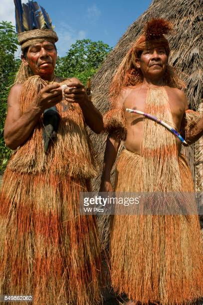 Yagua tribe located near Iquitos Amazonian Peru Blowguns called pucunas are greatly elongated and handcrafted and use it to hunt A yagua prepares...