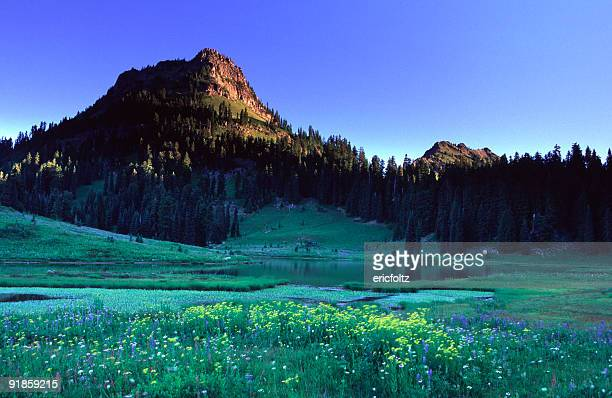 yakima peak - washington state stock pictures, royalty-free photos & images