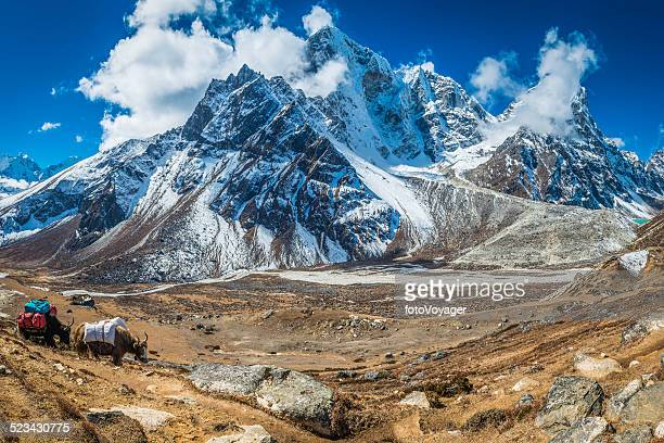 yaks carrying expedition equipment beneath dramatic himalaya mountain peaks nepal - nepal stock pictures, royalty-free photos & images