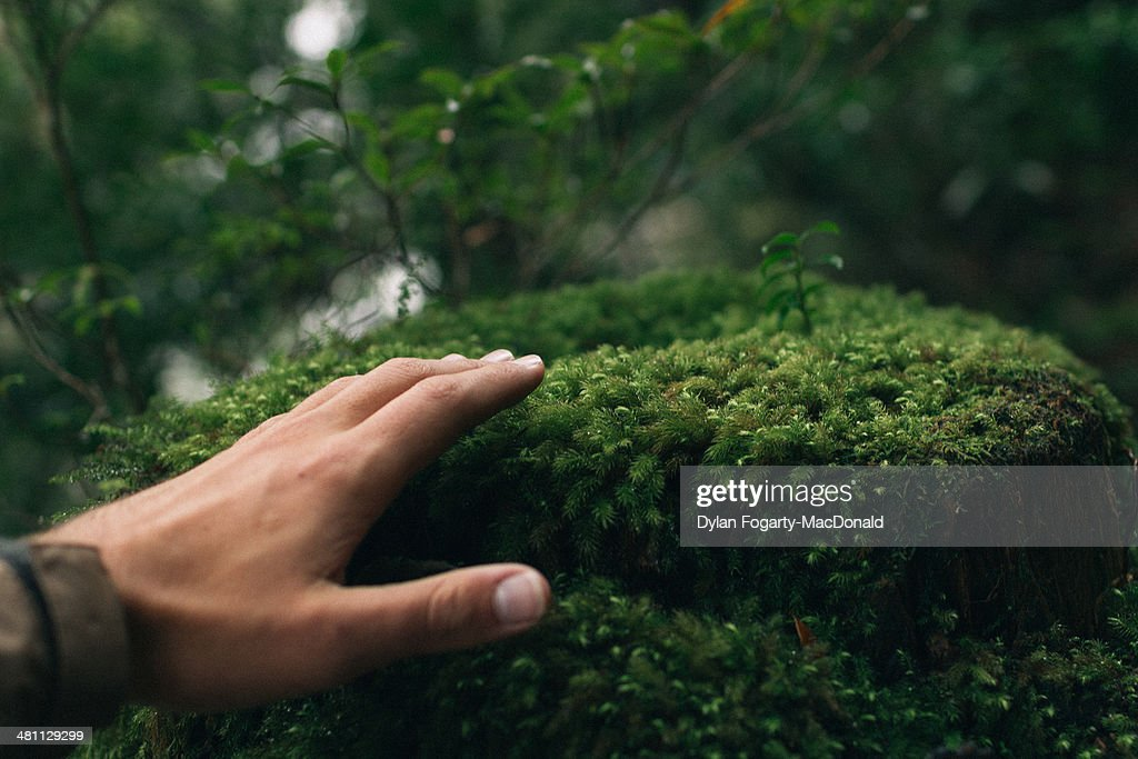 Yakushima : Stock Photo