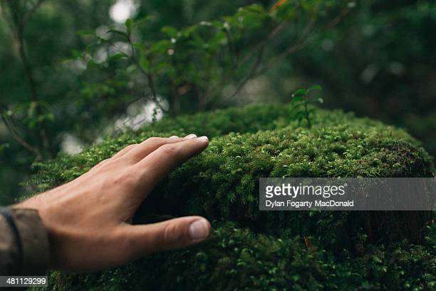 yakushima - moss stock pictures, royalty-free photos & images