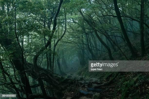 yakushima's misty forest, kagoshima, japan - foresta temperata foto e immagini stock