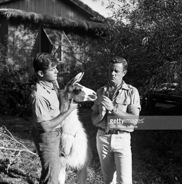 """Yale Summers and Marshall Thompson star in """"Daktari,"""" a CBS television African adventure series. Image dated: October 28, 1965."""