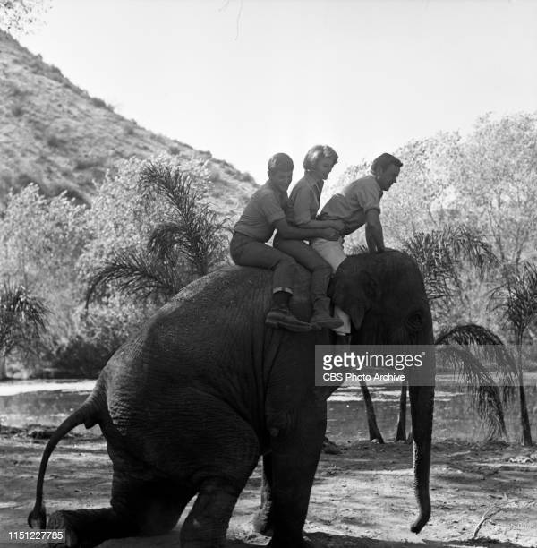 Yale Summers Cheryl Miller and Marshall Thompson star in Daktari a CBS television African adventure series Image dated October 28 1965
