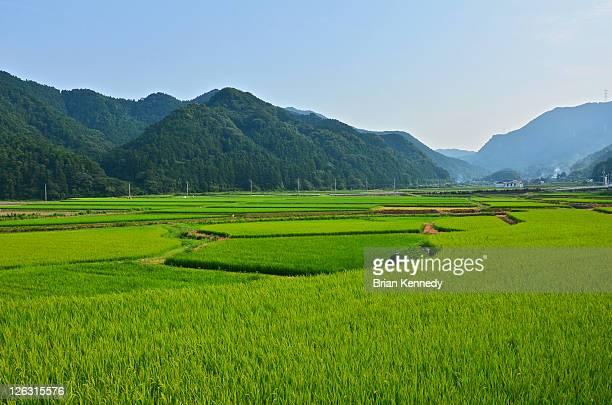yamaguchi district rice filed landscape - 水田 ストックフォトと画像