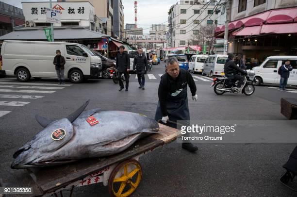 Yamayuki Group employee carries a fresh bluefin tuna after the year's first auction at Tsukiji Market on January 5 2018 in Tokyo Japan Yamayuki Group...