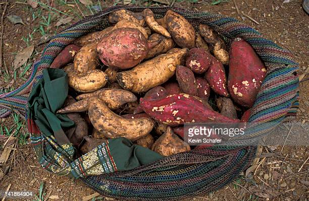 Yams, a primary Highlands food, Papua New Guinea