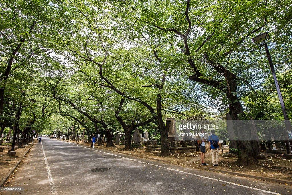 Yanaka Cemetery - The vast cemetery surrounding Tennoji... : News Photo