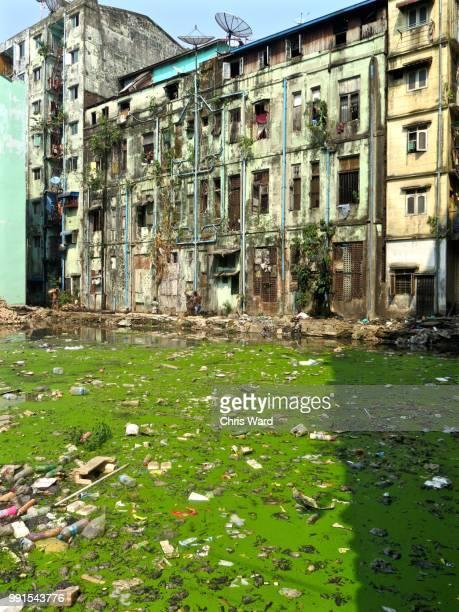 Yangon swamp