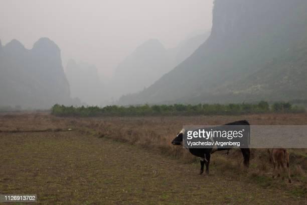 yangshuo countryside, majestic karst peaks, guangxi, china - argenberg ストックフォトと画像