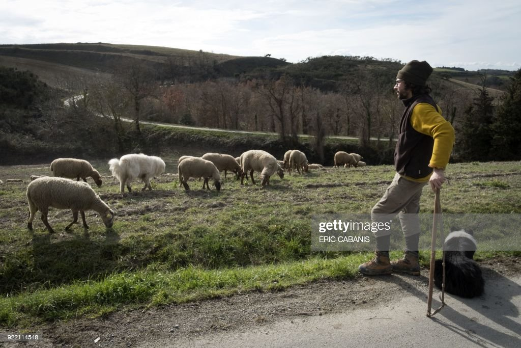Yann Vetois, a young livestock farmer who moved to Fanjeaux (Aude) in the 'natural region' of Piege five years ago, watches over his sheep as they graze near his farm in Fanjeaux on February 16, 2018. The region is considered a 'disadvantaged area', giving it entitlement to substantial aid through the government's 'Compensatory Allowance for Natural Handicap' program (Indemnite compensatoire de handicaps naturels, ICHN). The map of disadvantaged areas is currently being revised and Fanjeaux may be part of the 1,4000 communes removed from the list of disadvantaged areas. /