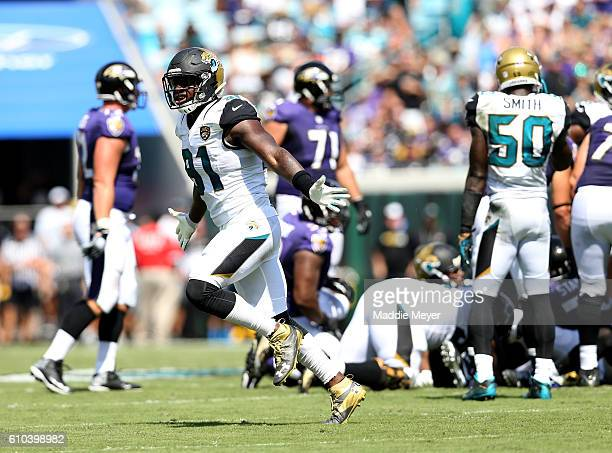 Yannick Ngakoue of the Jacksonville Jaguars celebrates a sack against the Baltimore Ravens at EverBank Field on September 25 2016 in Jacksonville...