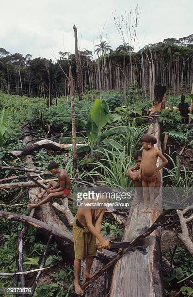 Yanomami Amerindians Venezuela Amazonas Serra Parima Orinoco River Basin The Yanomami continue to live as tribal farmers practising an ecologically...