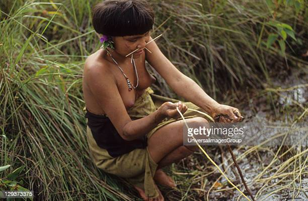Yanomami Amerindians Venezuelan Amazonas Serra Parima Orinoco River Basin Yanomami Girl Collecting Plants Used To Make Rope The Yanomami continue to...