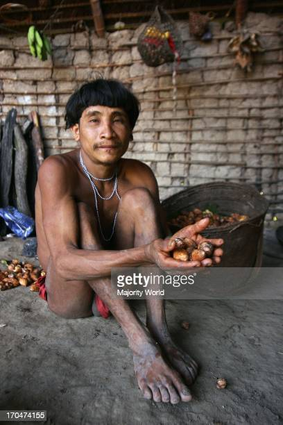 A Yanomami man holding some 'abiu' fruits a common food for the tribe Considered the Native Americans of South America the forestdwelling tribe live...