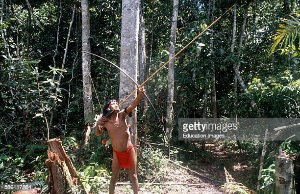Yanomamo aiming arrow into canopy at monkey a favored food forest near Patuco River Venezuela 1989