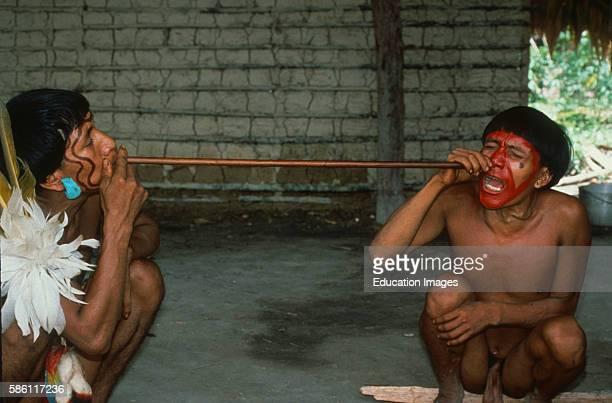 Yanomamo blowing ebene hallucinogenic snuff deep into nasal and sinus passages of another Shamparo ATeri Patuco River Venezuela Virola sp vine