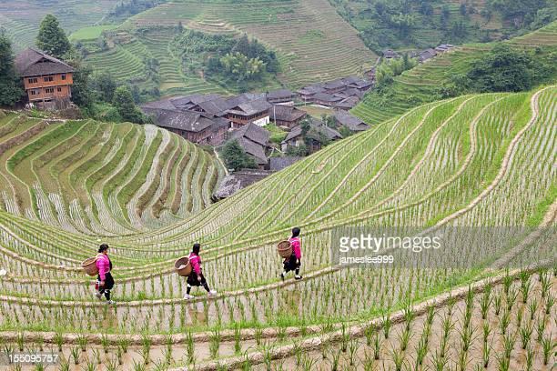 Yao Girls Working at Rice Paddy