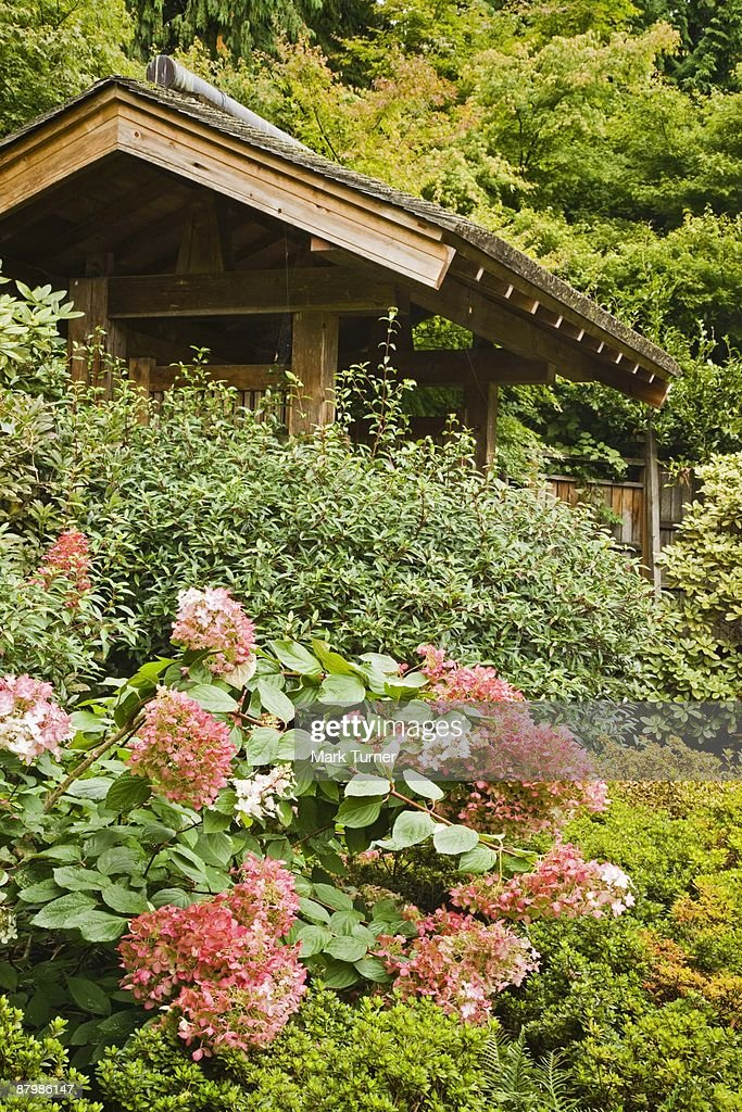 Yao Japanese Garden With Ruby Hydrangea And Rhododendrons