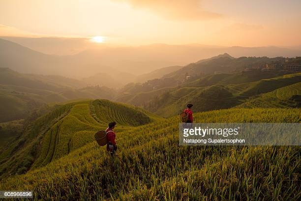 Yao Minority Women Working at Rice Paddy during Sunrise