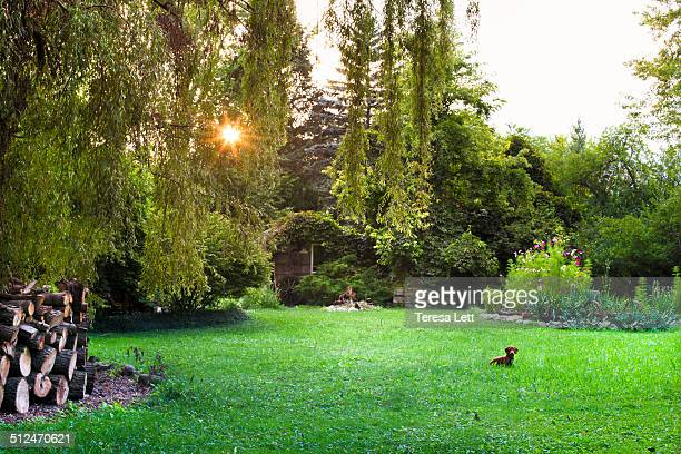 Yard with garden and dog
