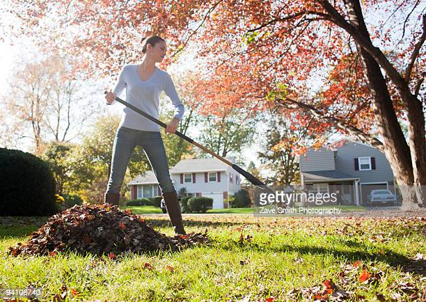 yard work - rake stock pictures, royalty-free photos & images