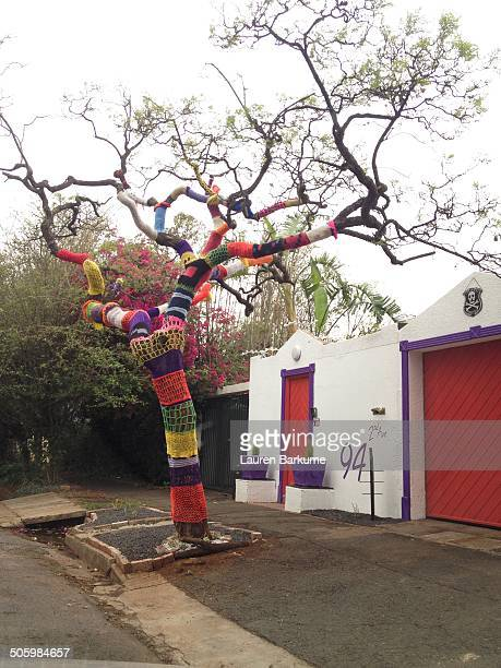 A yarn bombed tree outside a home in the neighborhood of Melville Johannesburg South Africa