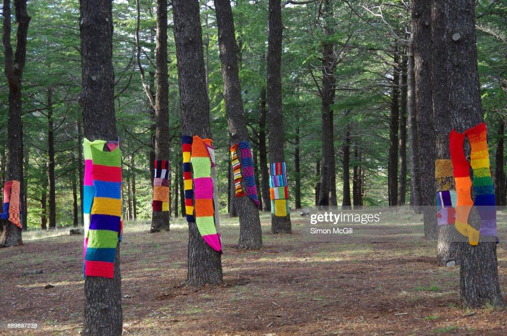 Yarn bombing on a tree at the National Arboretum, Canberra, Australian Capital Territory, Australia : Stock Photo