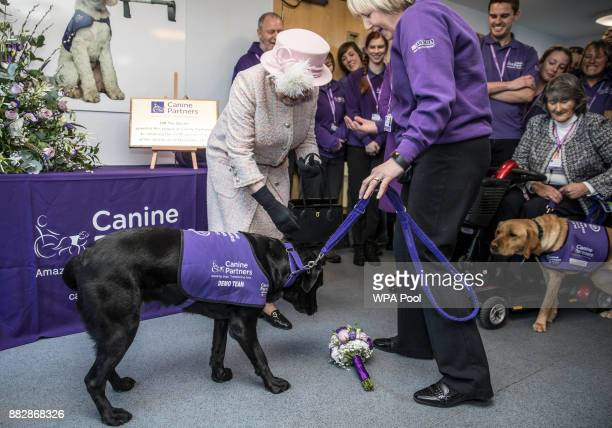 'Yarna' the black Labrador drops the bouquet of posies she was holding in her mouth to present to Queen Elizabeth II following Queen Elizabeth II's...