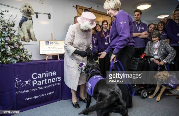 'Yarna' the black Labrador presents Queen Elizabeth II with a bouquet of posies in it's mouth before she dropped it at Queen Elizabeth IIs feet at...