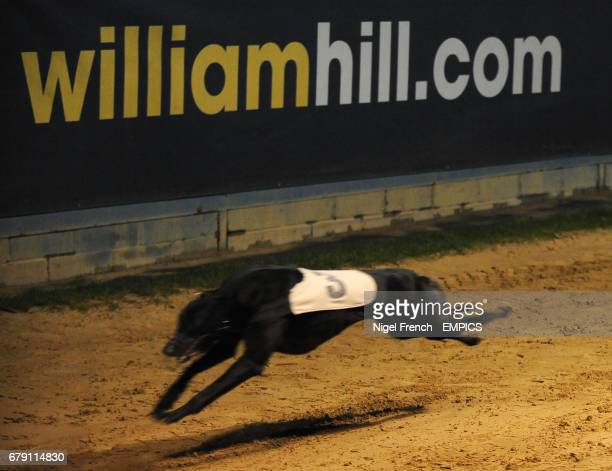 Yassoo Kitty goes onto win the William Hill Download the App