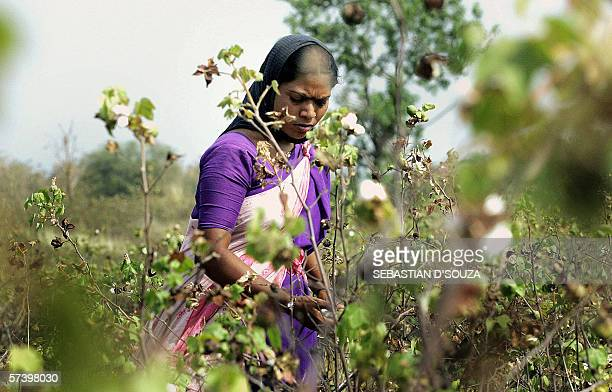 TO GO WITH 'INDIAFARMERAGRICULTURESUICIDE' In this picture taken 18 April 2006 at Yavatmal outside Nagpur in the east of India's western state of...