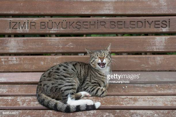 yawning cat on a park bench. - emreturanphoto stock pictures, royalty-free photos & images