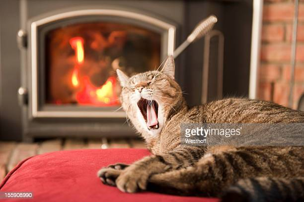 yawning cat - wood burning stove stock photos and pictures