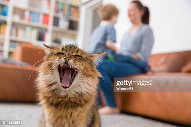 yawning cat sitting in living room, mother and son playing in background - yawning mother child stock photos and pictures