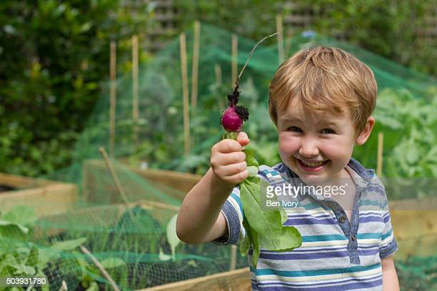 5 year old boy holding home grown radish in front of vegetable patch