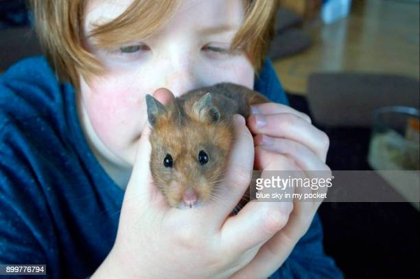 A 12 year old boy with his pet golden Hamster.