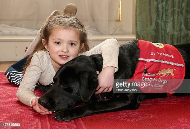 6 year old Cerys Davies holds her medical detection dog Wendy at St James's Palace on March 11 2014 in London England 10 year old Daisy has a 94%...