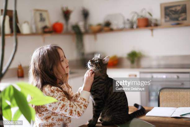 a 6 year old girl petting her cat in the kitchen - 脊椎動物 ストックフォトと画像