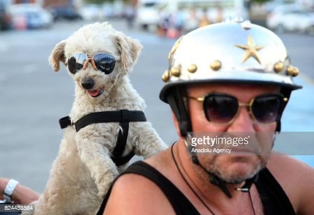 52 year old Hakki Usta rides his motorcycle with his pet 'Kafe' as domestic and foreign athletes and their families show interest to 'kafe' after he...