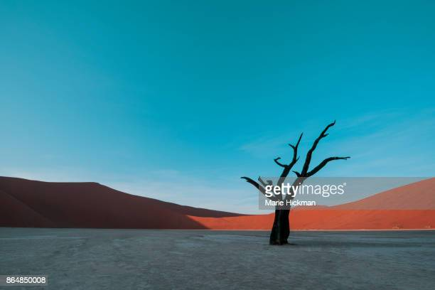 400 Year Old PETRIFIED TREE in Deadvlei, Namibia, Africa a travel destination.