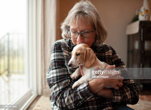 60 year old woman kissing her puppy at home sitting by window - 63 year old female stock pictures, royalty-free photos & images