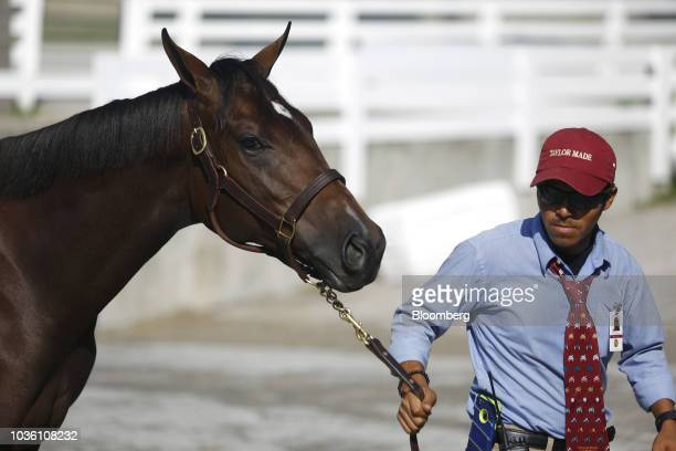 Prospective buyers study sale programs during the 75th annual Keeneland September Yearling Sale at Keeneland Racecourse in Lexington Kentucky US on...